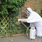 Croydon wasp nest removal link